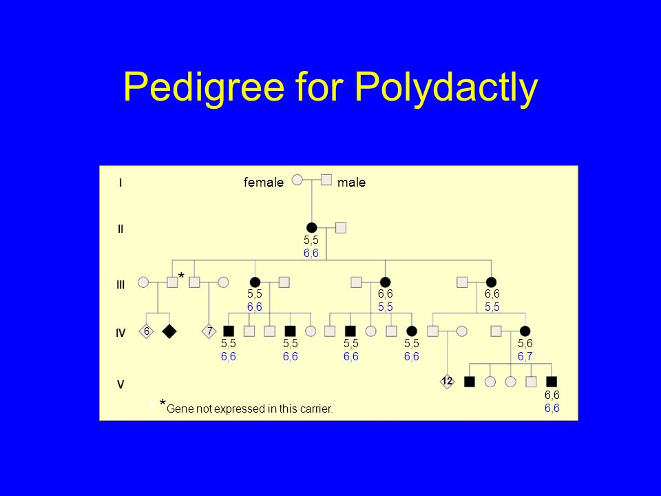 Pedigree for Polydactly