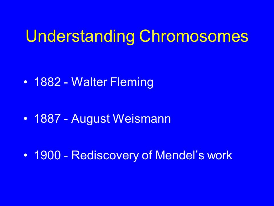 Understanding Chromosomes