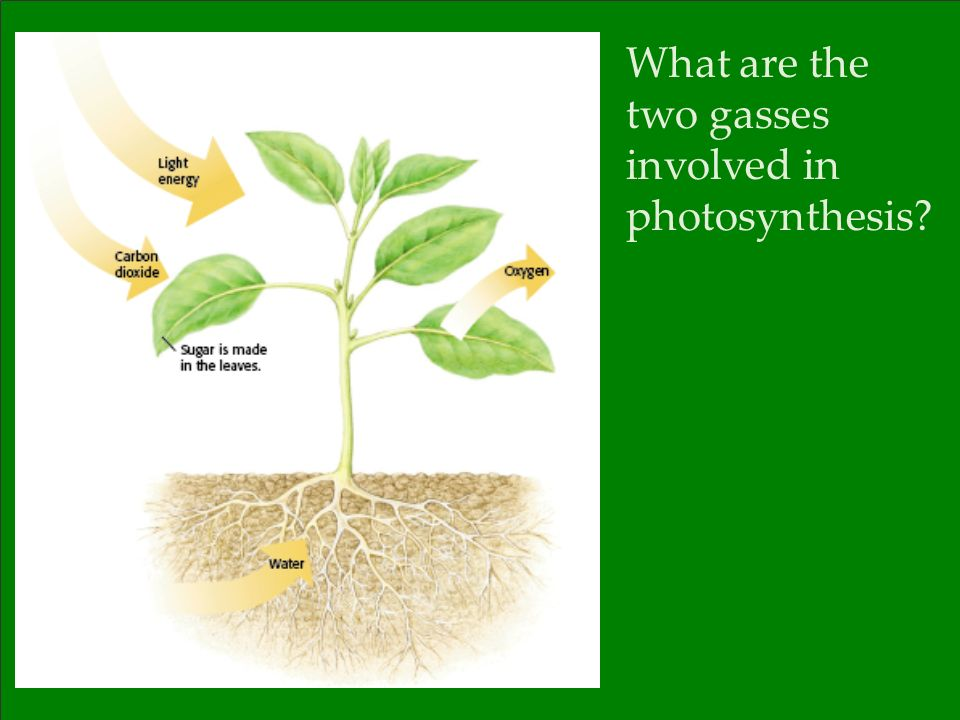 What are the two gasses involved in photosynthesis