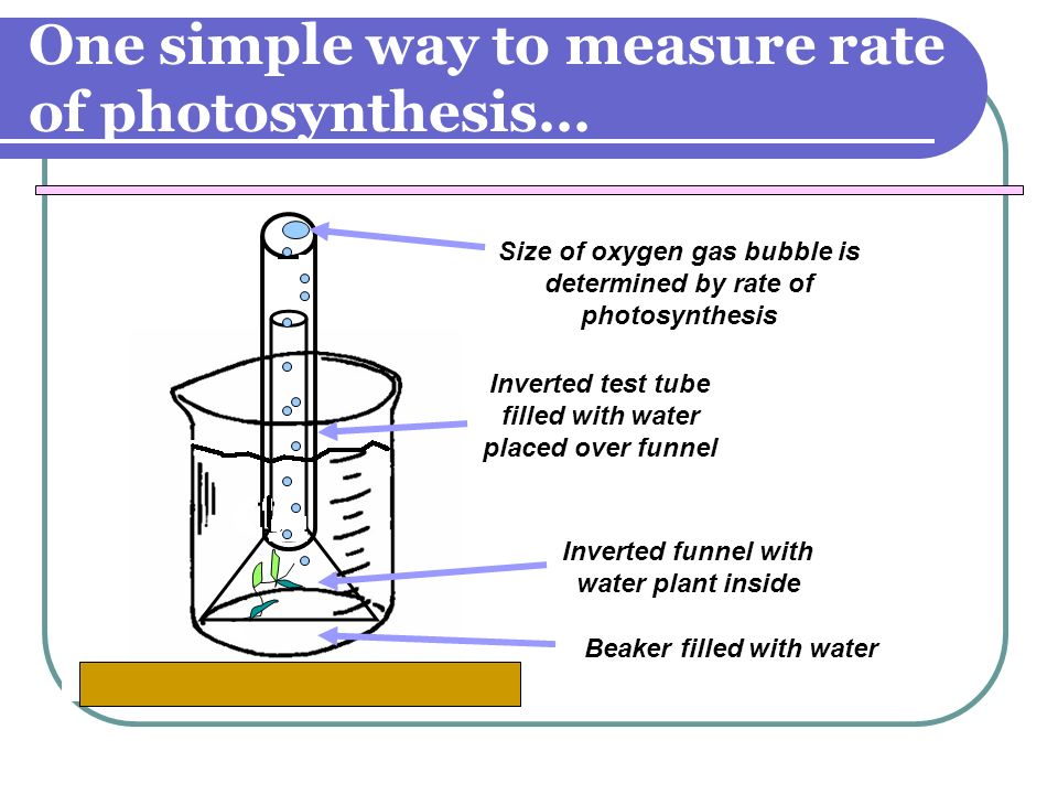 One simple way to measure rate of photosynthesis…