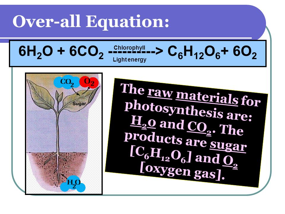 6H2O + 6CO2 ----------> C6H12O6+ 6O2