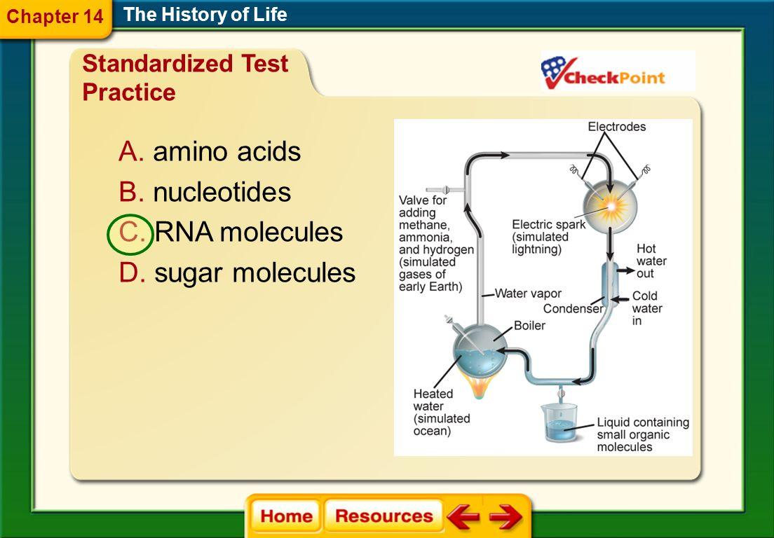amino acids nucleotides RNA molecules sugar molecules