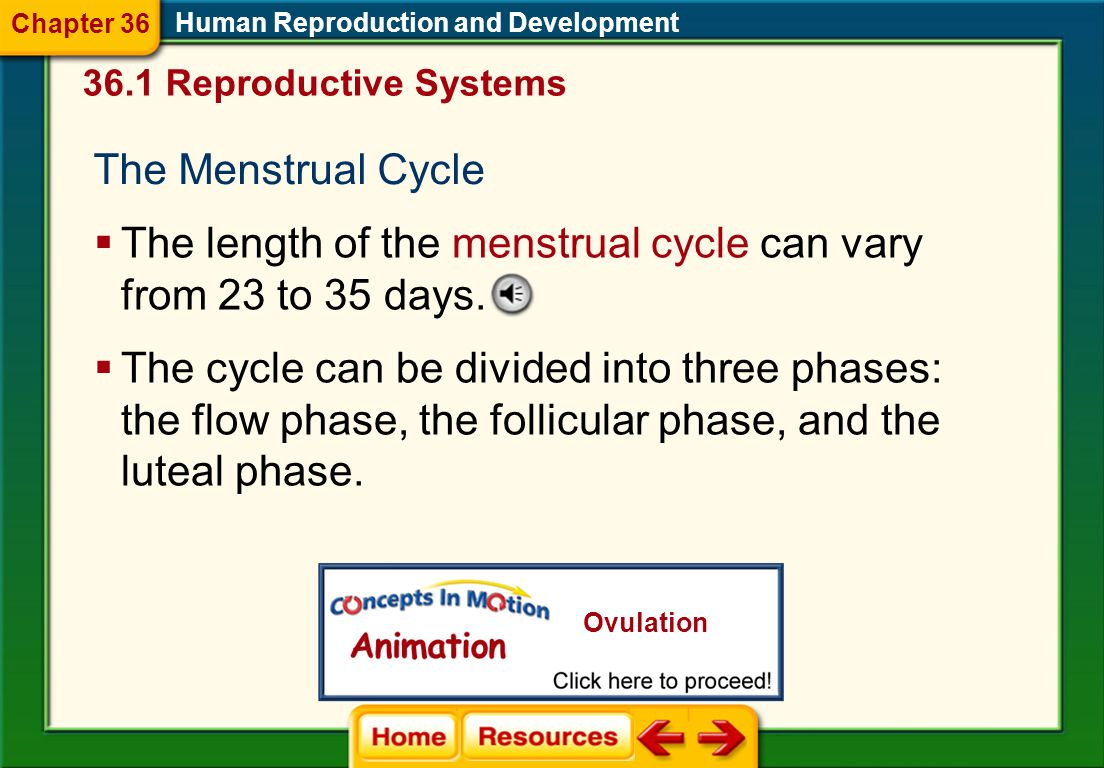 The length of the menstrual cycle can vary from 23 to 35 days.