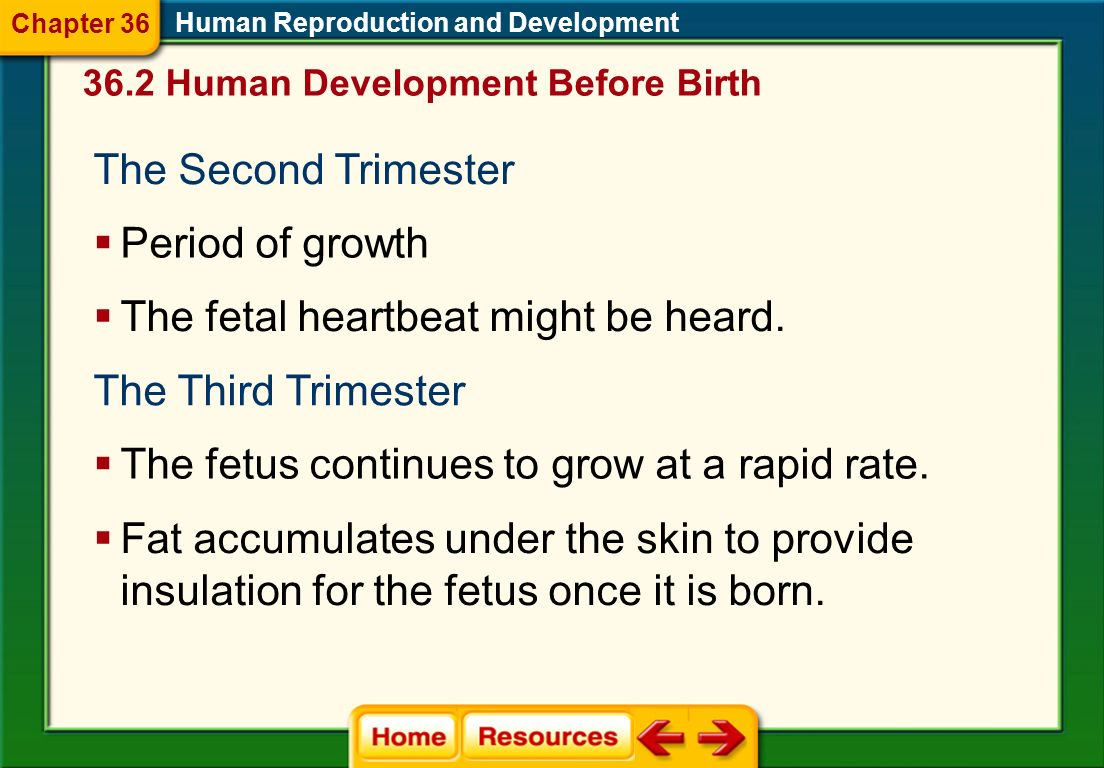 The fetal heartbeat might be heard.