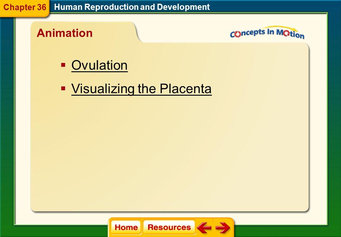 Visualizing the Placenta