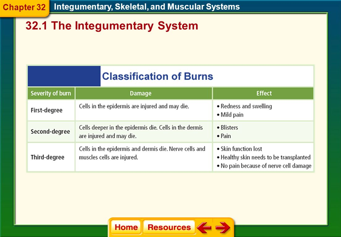32.1 The Integumentary System