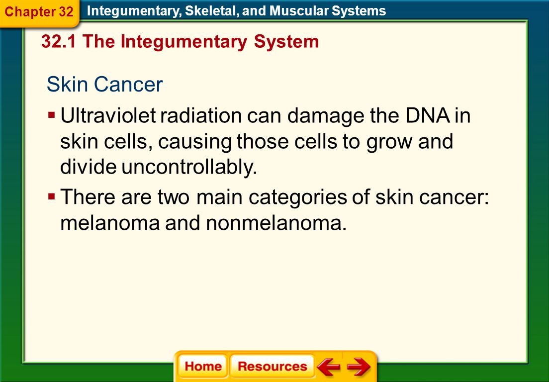 Chapter 32 Integumentary, Skeletal, and Muscular Systems. 32.1 The Integumentary System. Skin Cancer.