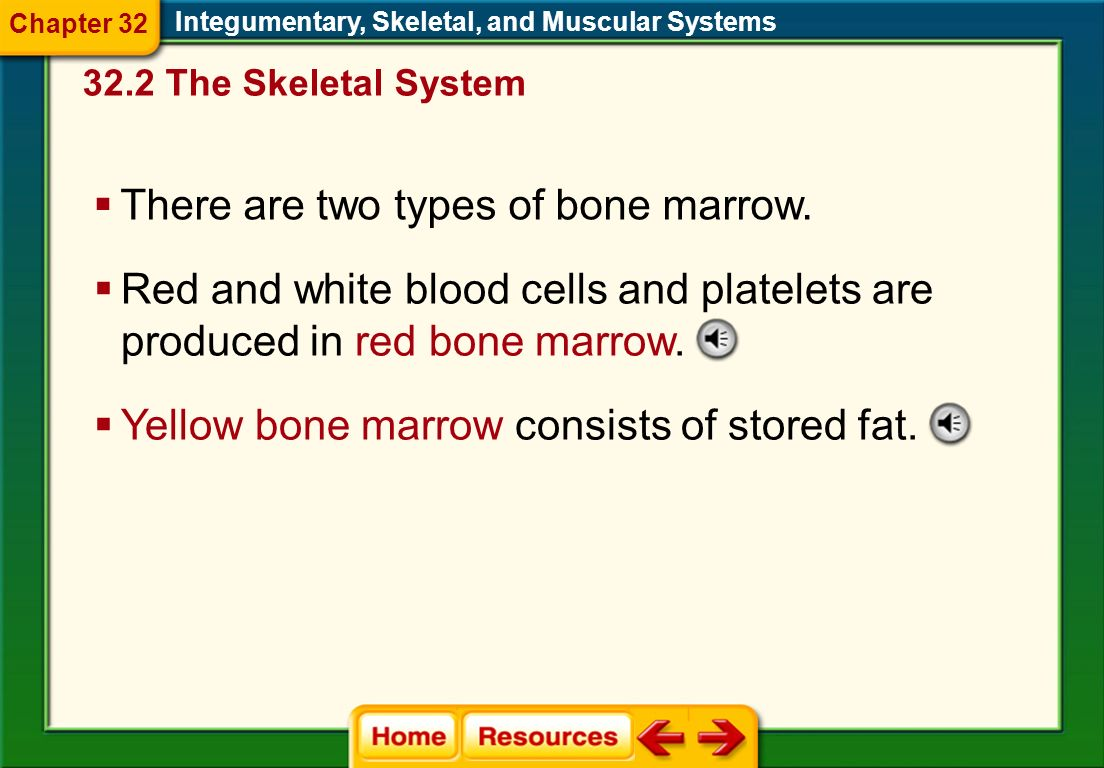 There are two types of bone marrow.