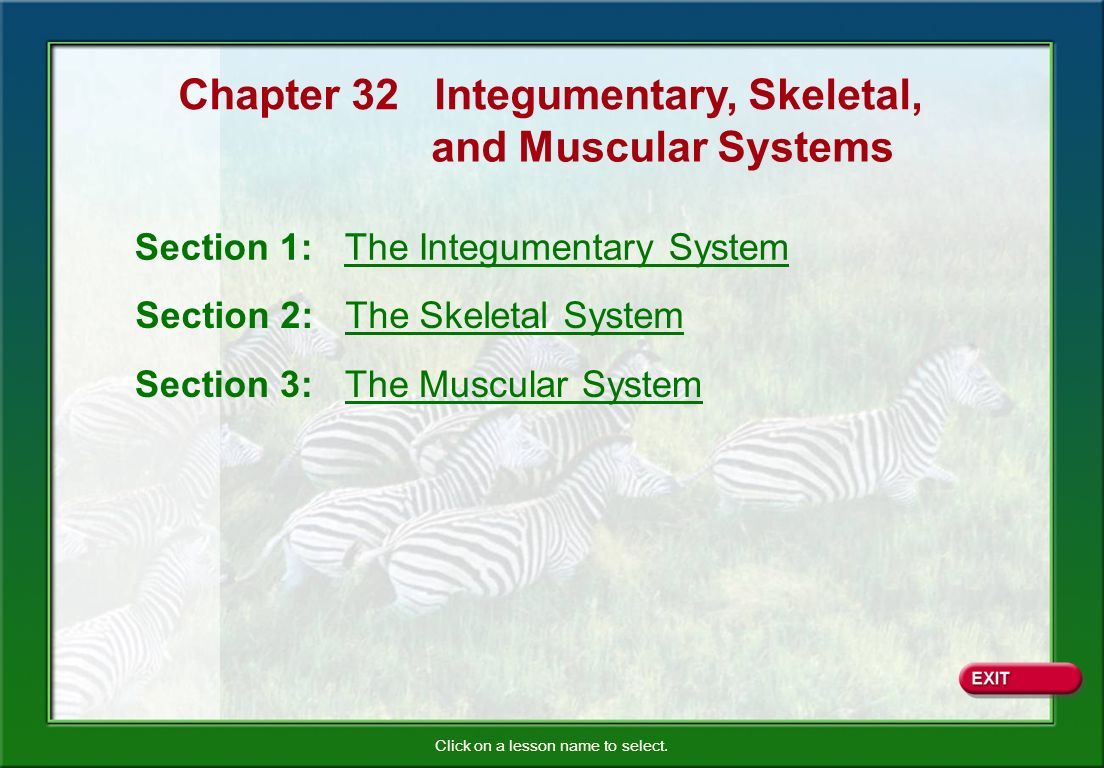 Chapter 32 Integumentary, Skeletal,