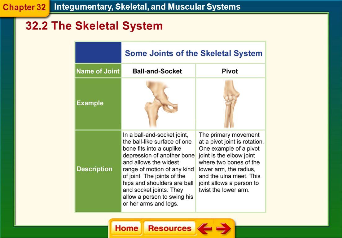 32.2 The Skeletal System Chapter 32