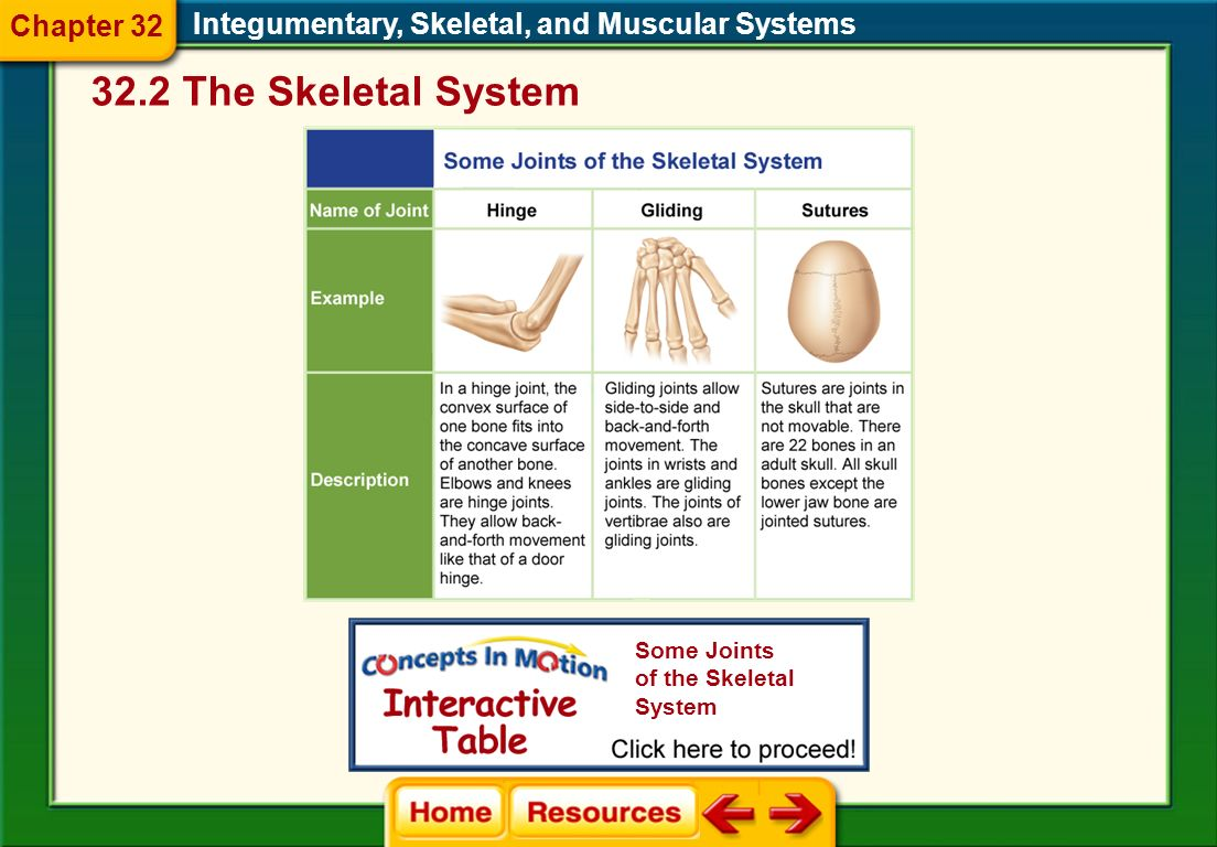 32.2 The Skeletal System Chapter 32