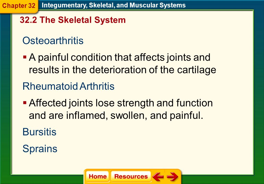 Chapter 32 Integumentary, Skeletal, and Muscular Systems. 32.2 The Skeletal System. Osteoarthritis.