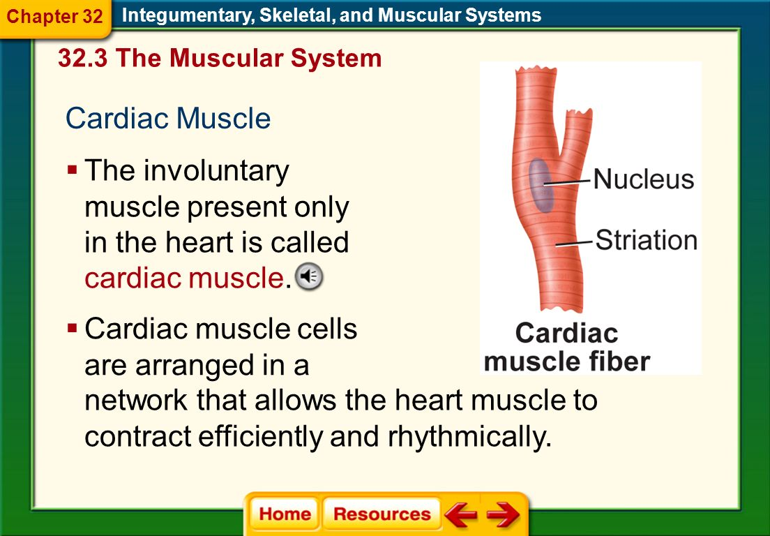 Cardiac muscle cells are arranged in a