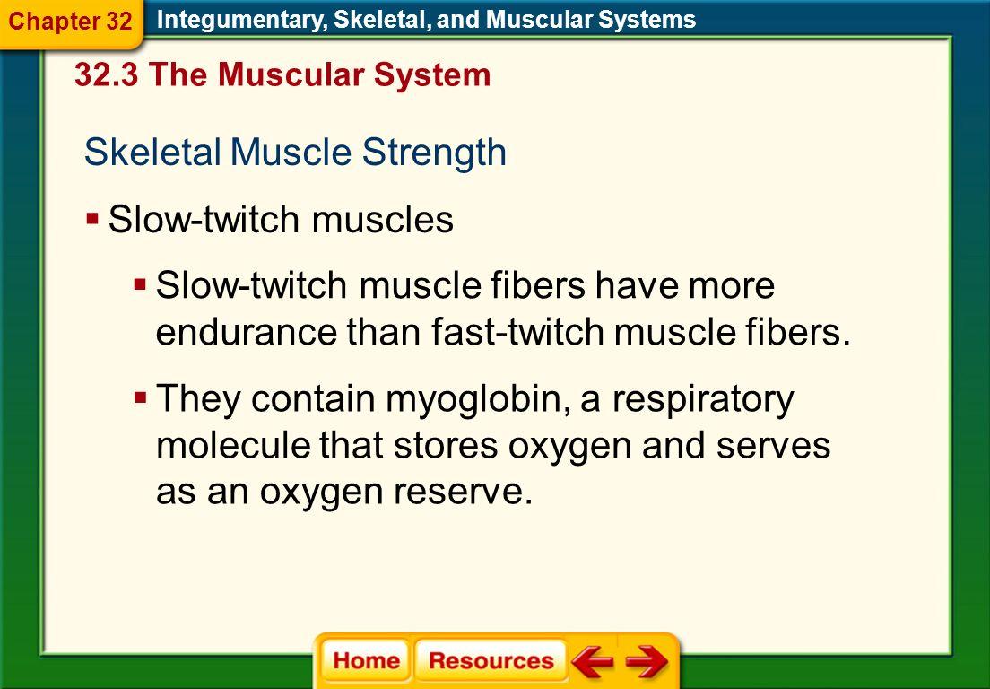 Skeletal Muscle Strength