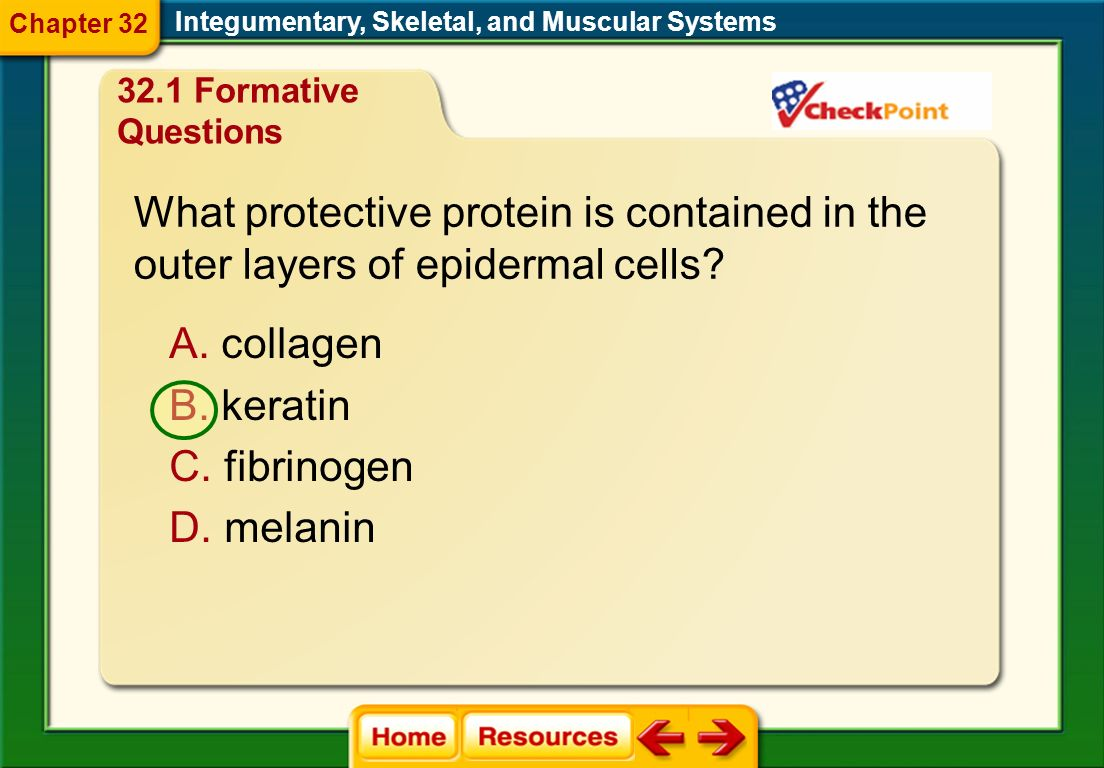What protective protein is contained in the
