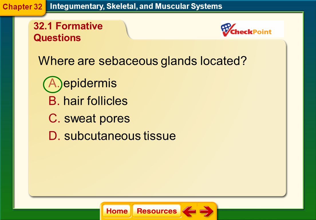 Where are sebaceous glands located