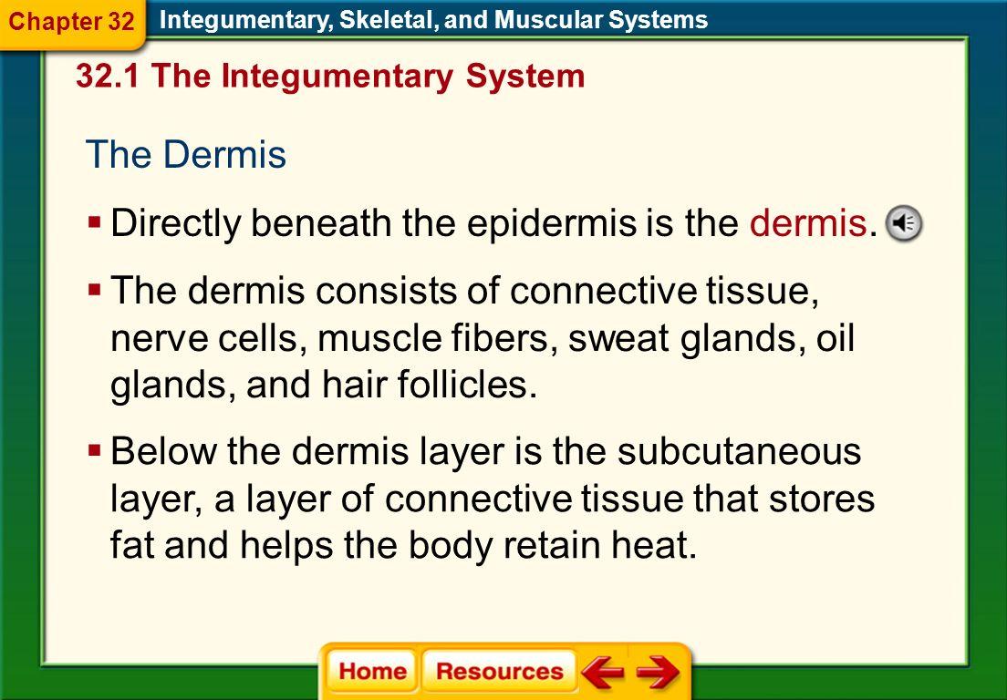 Directly beneath the epidermis is the dermis.
