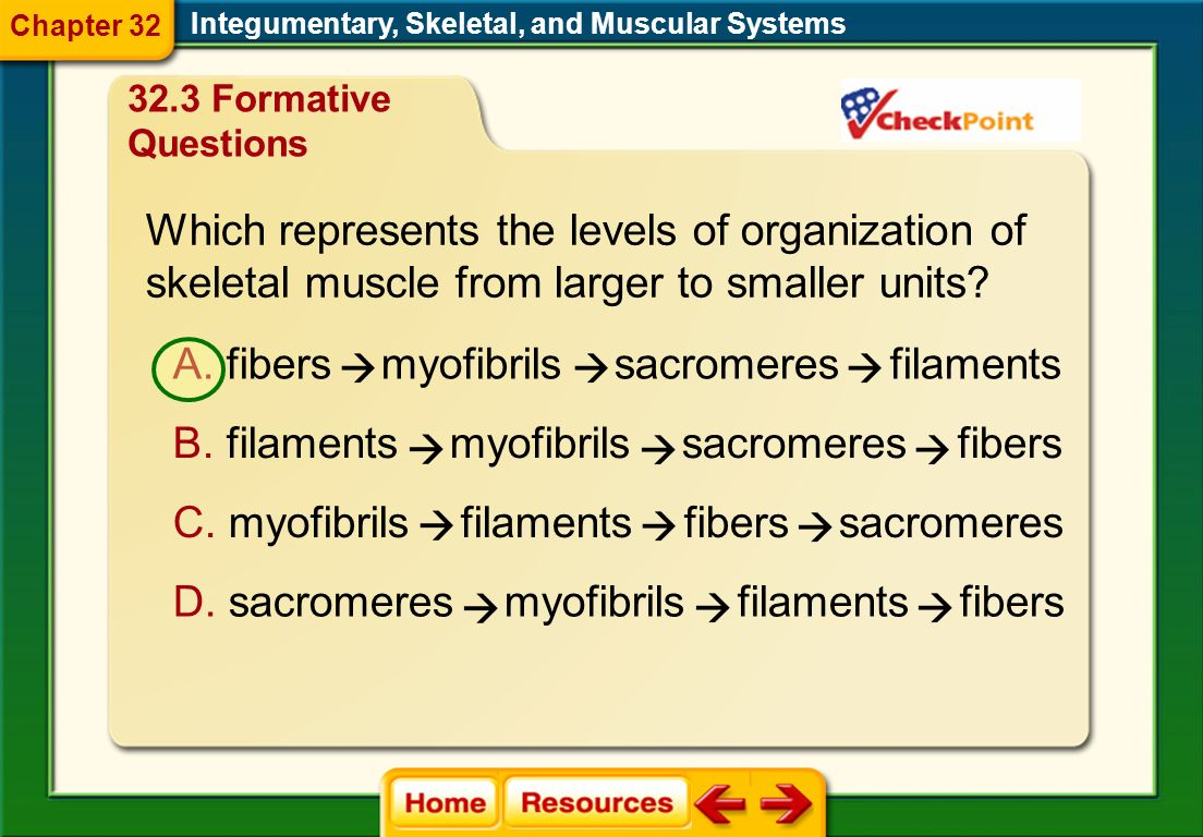 Which represents the levels of organization of