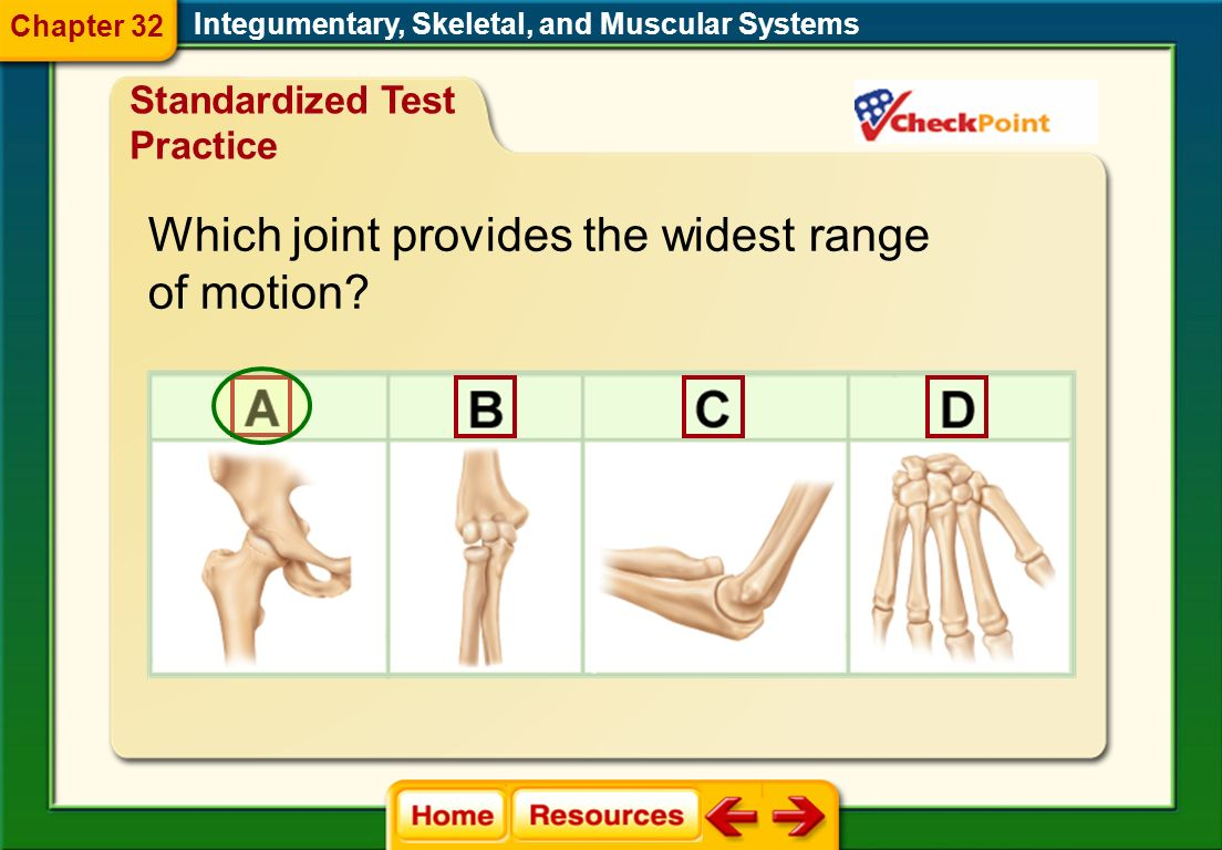 Which joint provides the widest range of motion