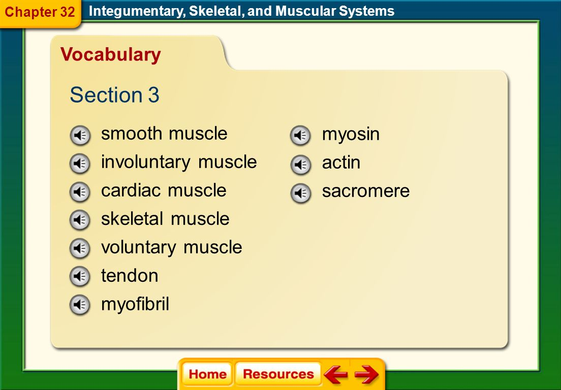 Section 3 Vocabulary smooth muscle myosin involuntary muscle actin