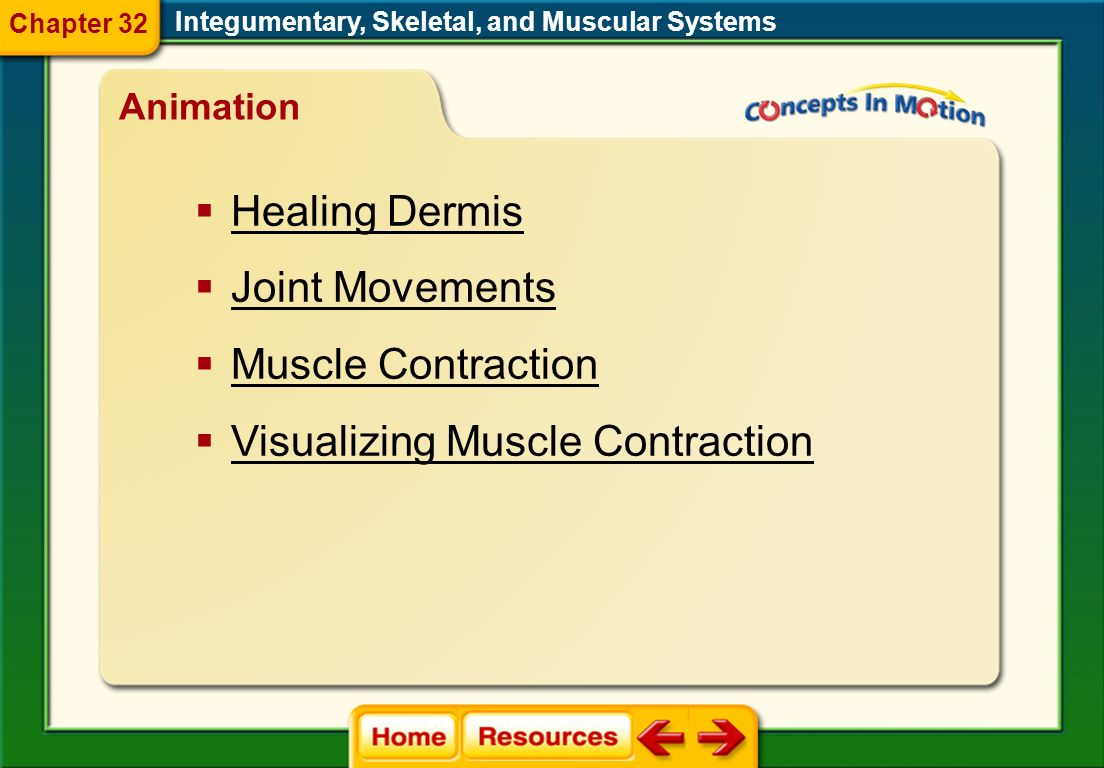 Visualizing Muscle Contraction