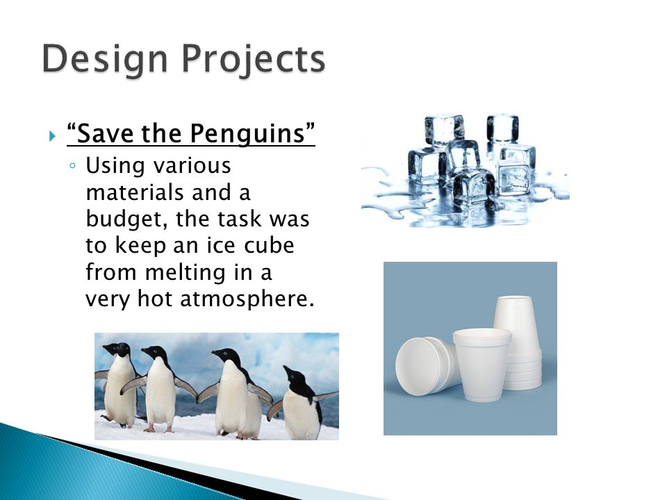 Design Projects Save the Penguins