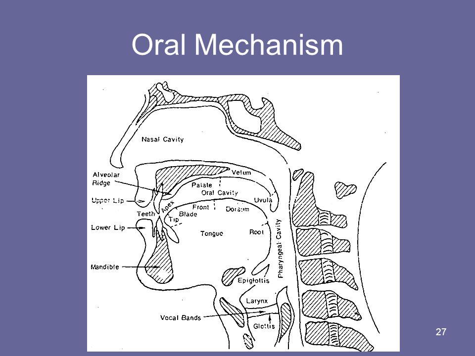 Oral Mechanism