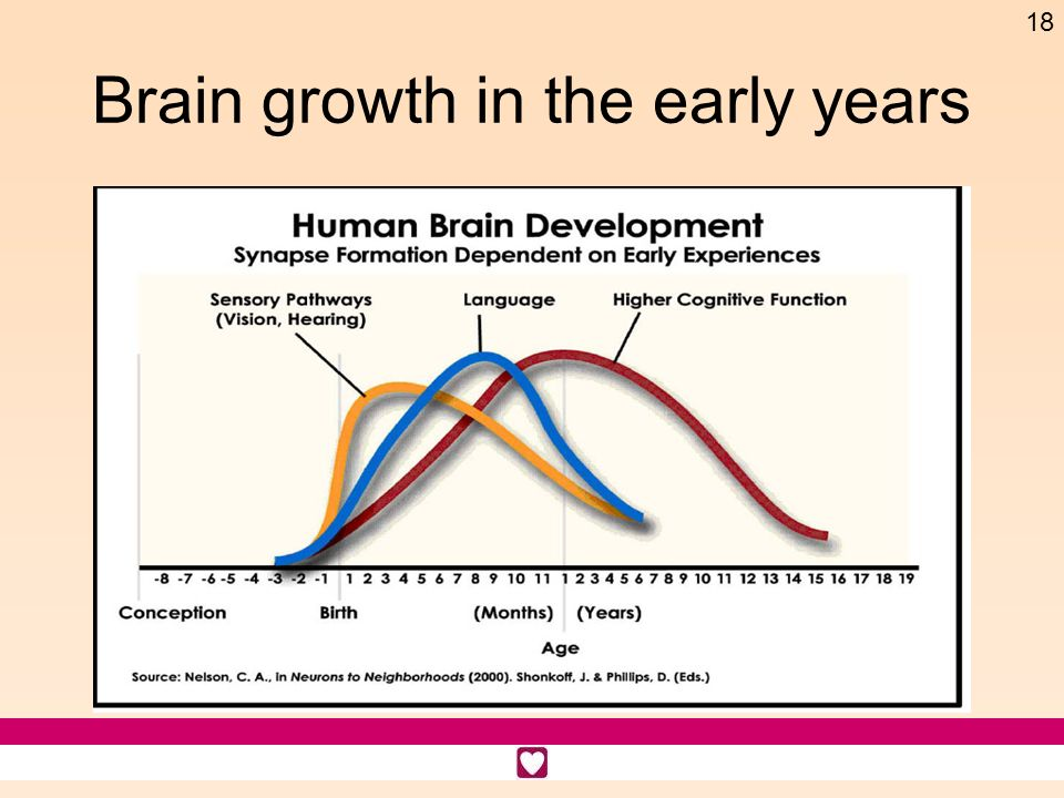 Brain growth in the early years