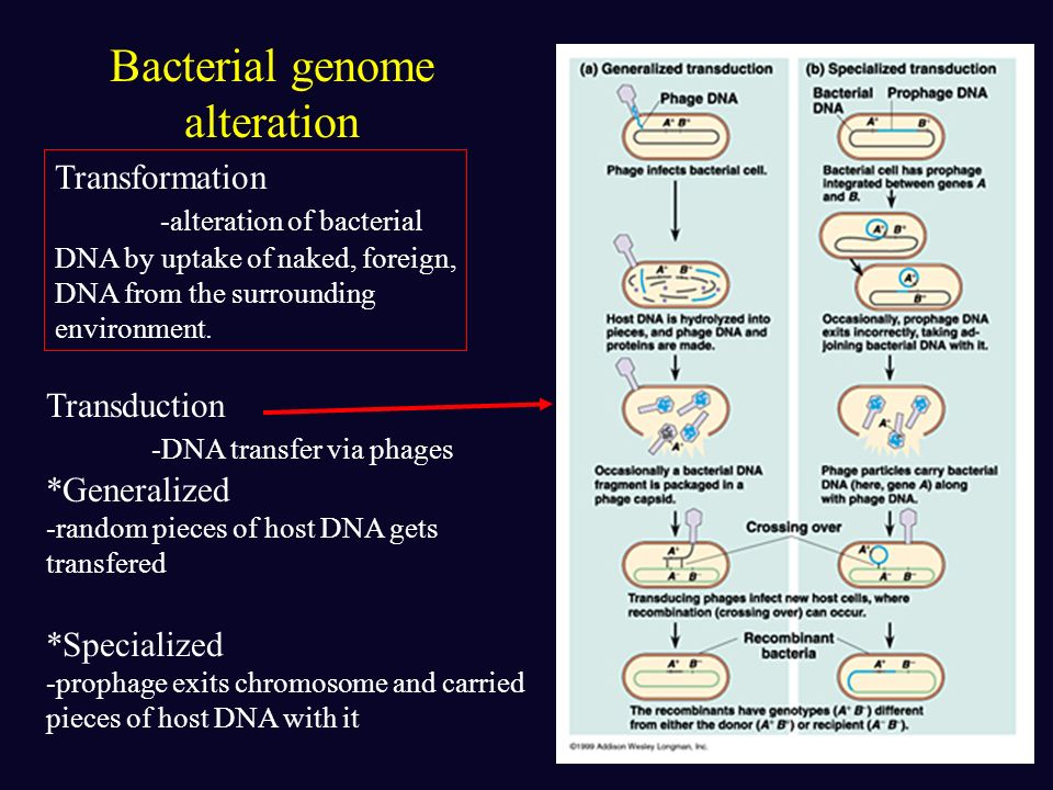 Bacterial genome alteration