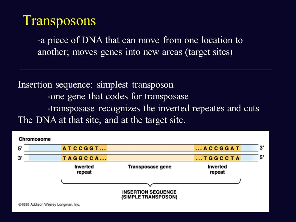 Transposons -a piece of DNA that can move from one location to