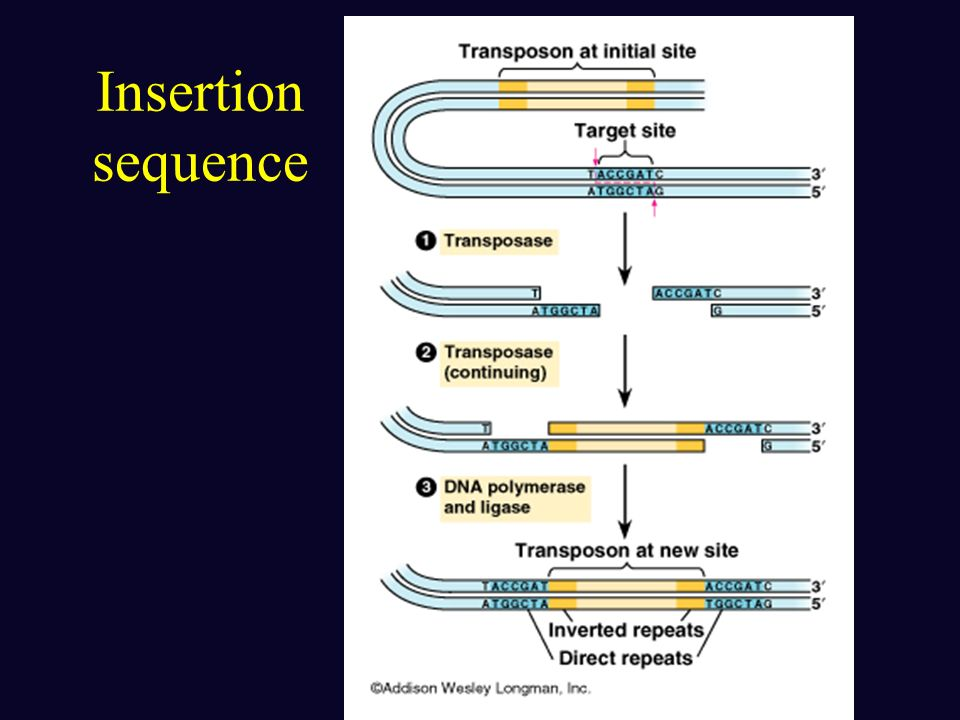 Insertion sequence