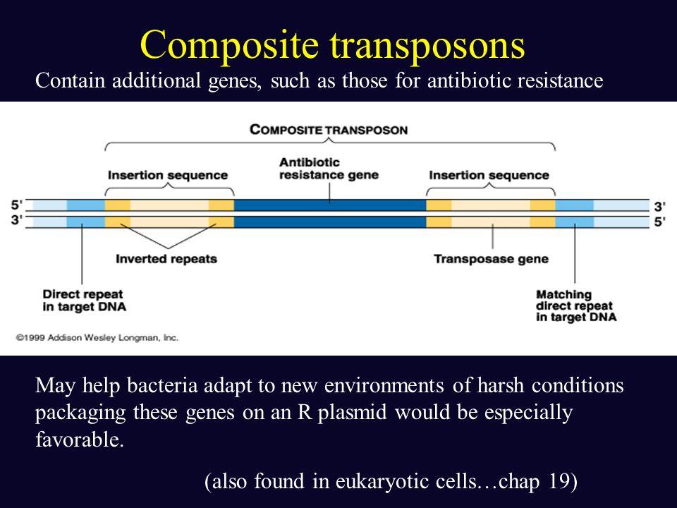 Composite transposons