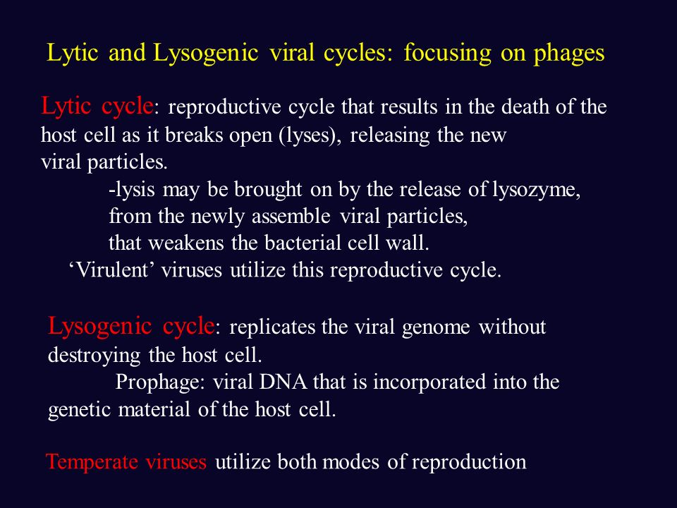 Lytic and Lysogenic viral cycles: focusing on phages