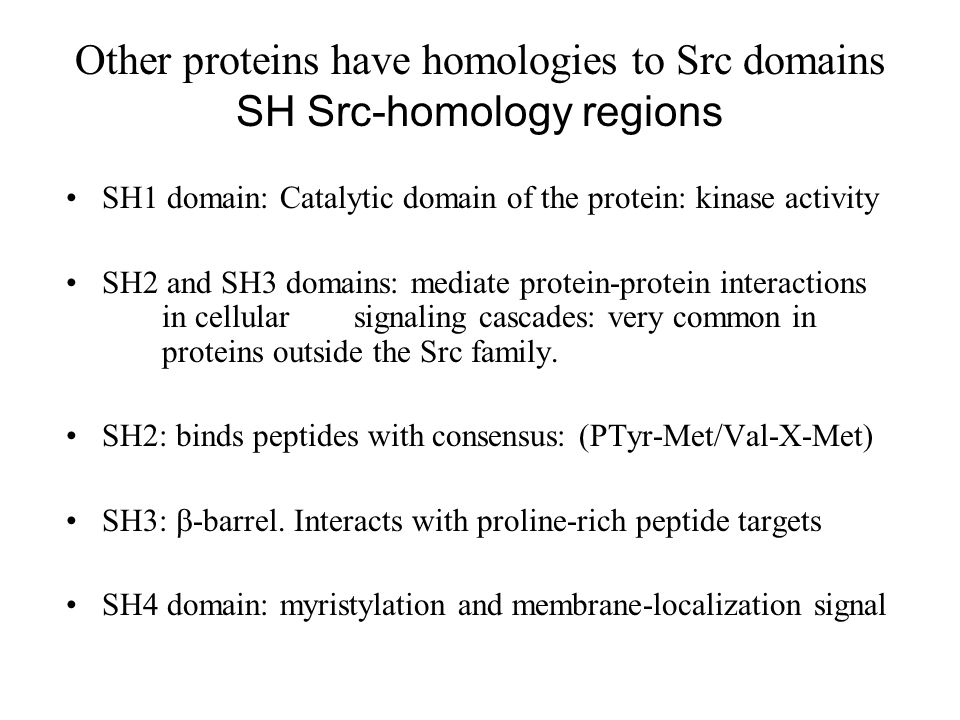 Other proteins have homologies to Src domains SH Src-homology regions