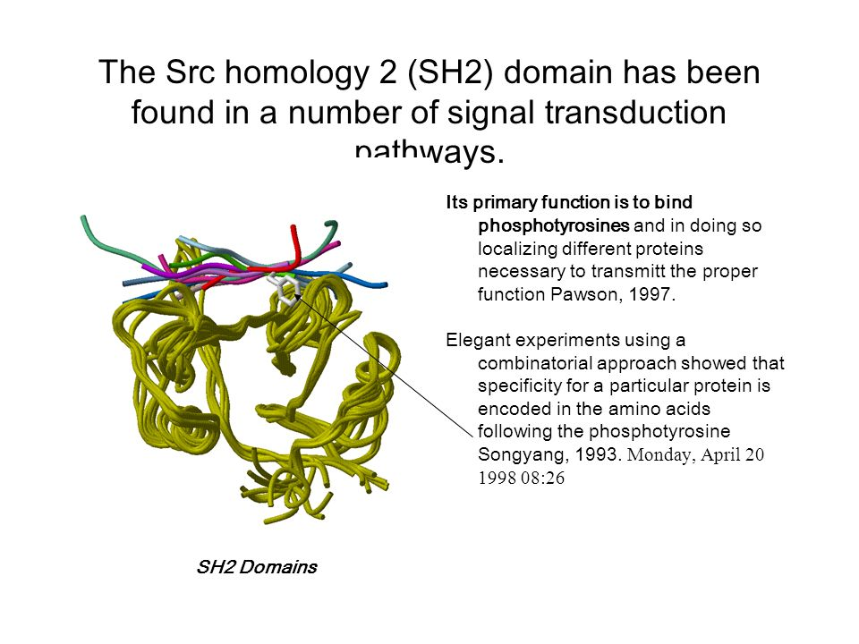 The Src homology 2 (SH2) domain has been found in a number of signal transduction pathways.