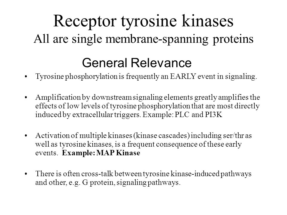 Receptor tyrosine kinases All are single membrane-spanning proteins