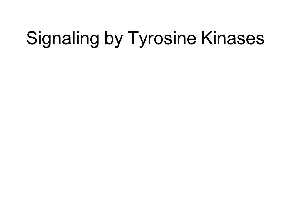Signaling by Tyrosine Kinases