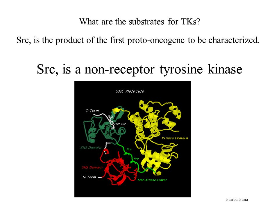 Src, is the product of the first proto-oncogene to be characterized.