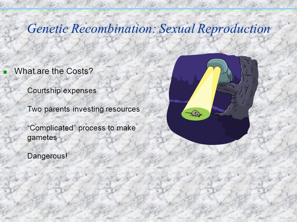 Genetic Recombination: Sexual Reproduction
