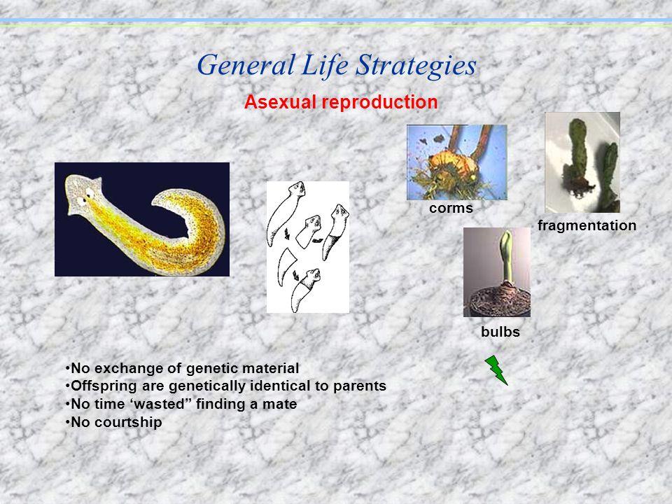 General Life Strategies