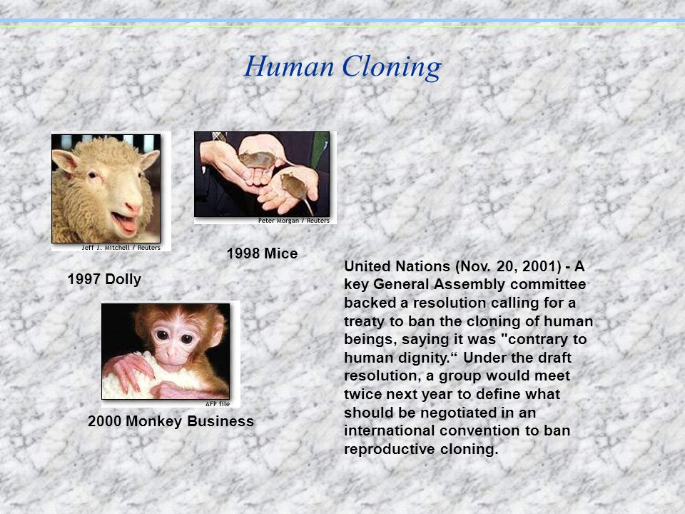Human Cloning 1998 Mice.