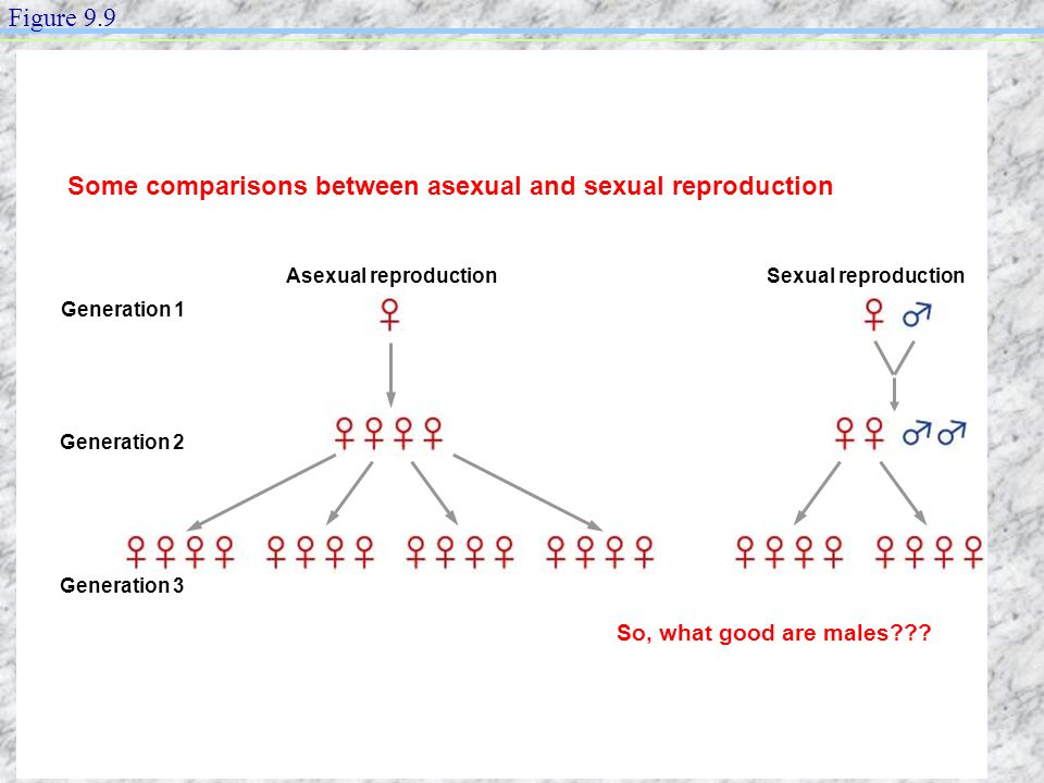 Some comparisons between asexual and sexual reproduction