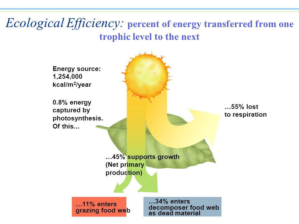 Ecological Efficiency: percent of energy transferred from one trophic level to the next