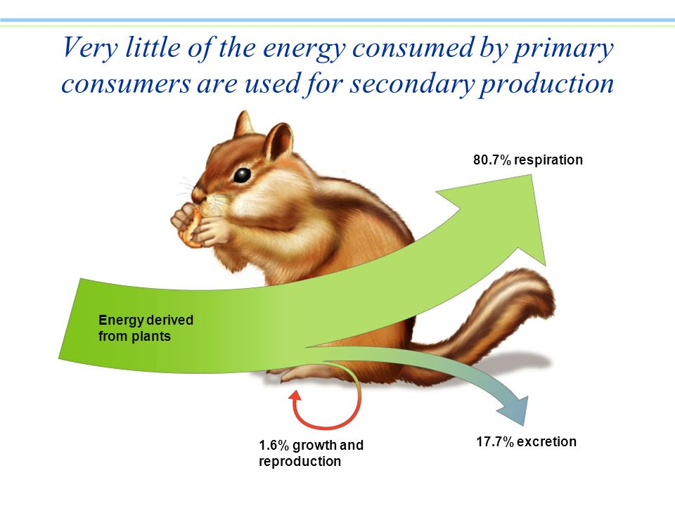 Very little of the energy consumed by primary consumers are used for secondary production
