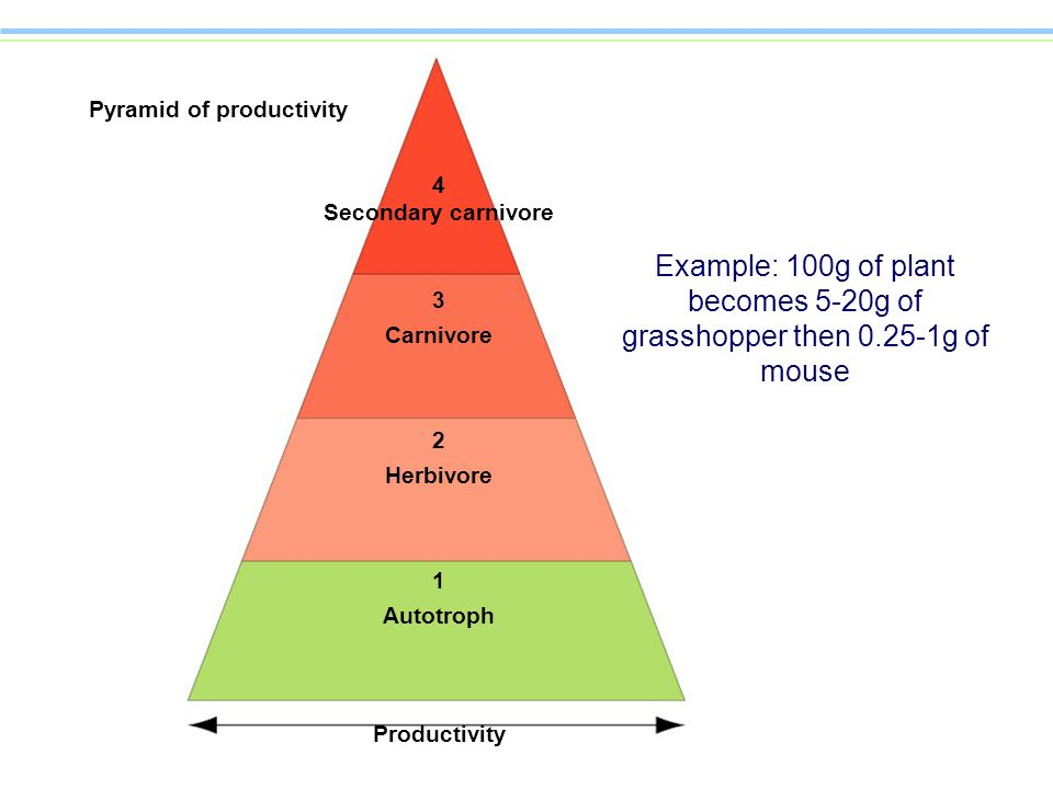 Pyramid of productivity