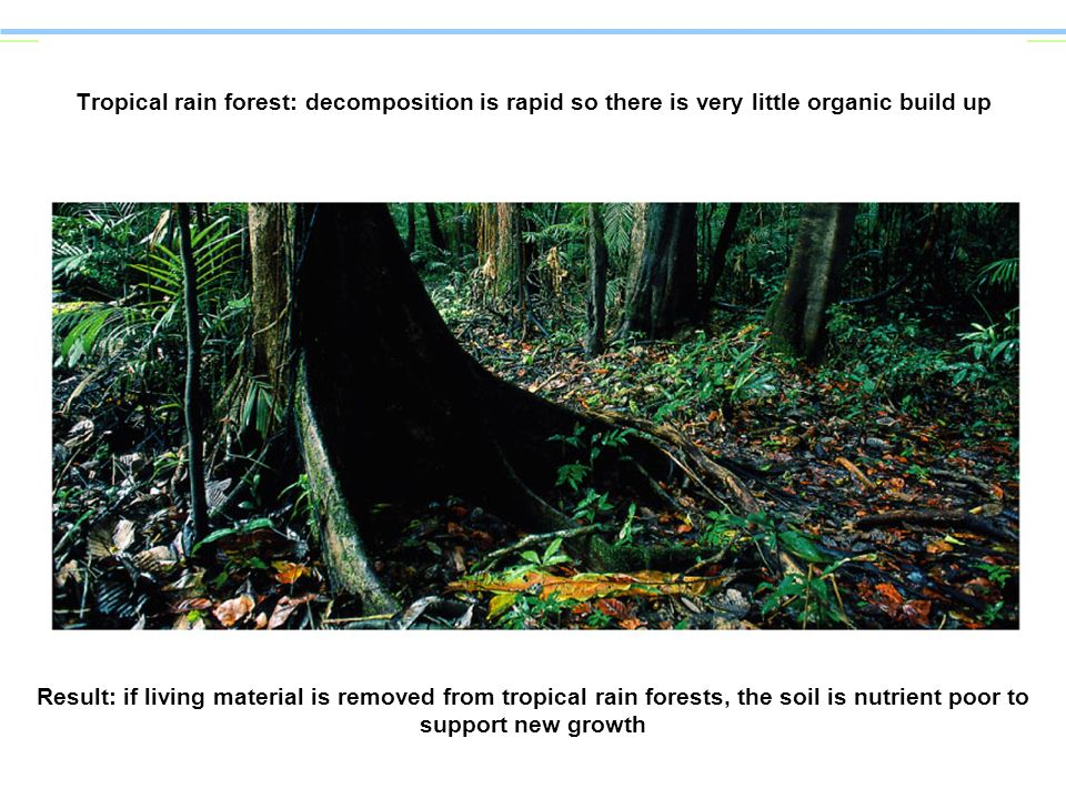 Tropical rain forest: decomposition is rapid so there is very little organic build up