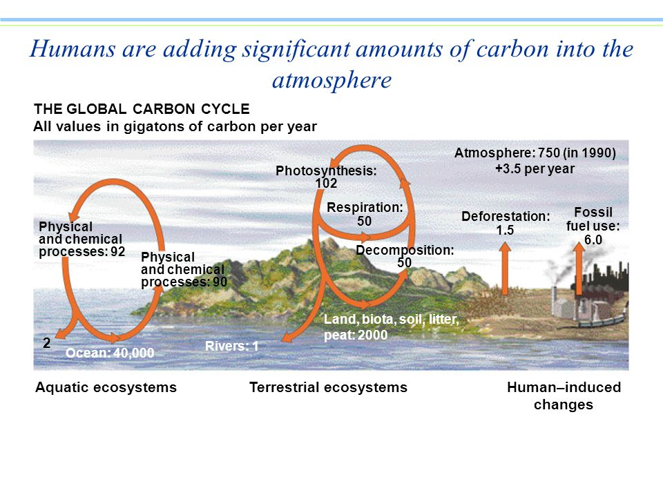 Humans are adding significant amounts of carbon into the atmosphere