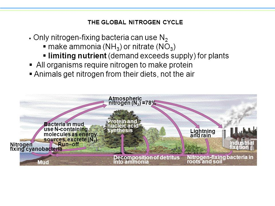 THE GLOBAL NITROGEN CYCLE