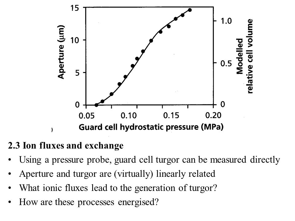2.3 Ion fluxes and exchange