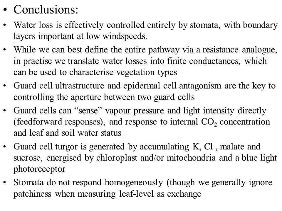 Conclusions: Water loss is effectively controlled entirely by stomata, with boundary layers important at low windspeeds.